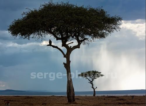 http://shop.serge-photo.ru/451-thickbox_default/img7388.jpg